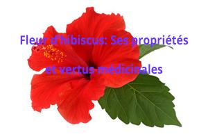 Quelles sont les propriétés et vertus médicinales de la fleur d'hibiscus?